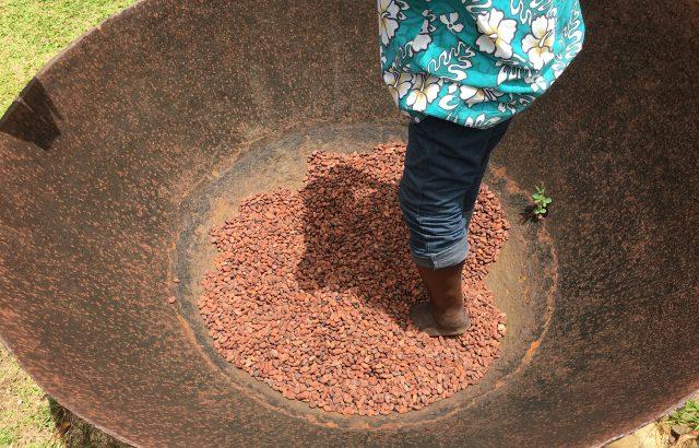 cocoa-mashing