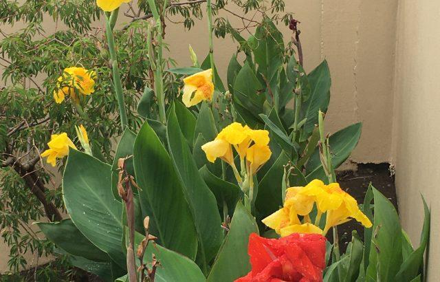 Property – Flowers_1
