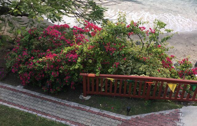 Property – Garden flowers