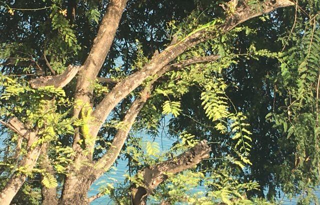 Property – Iguanas_2