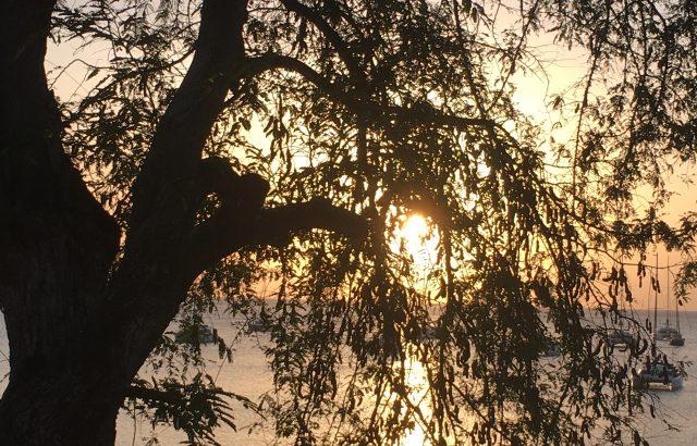 Property – Tamarind Tree sunset